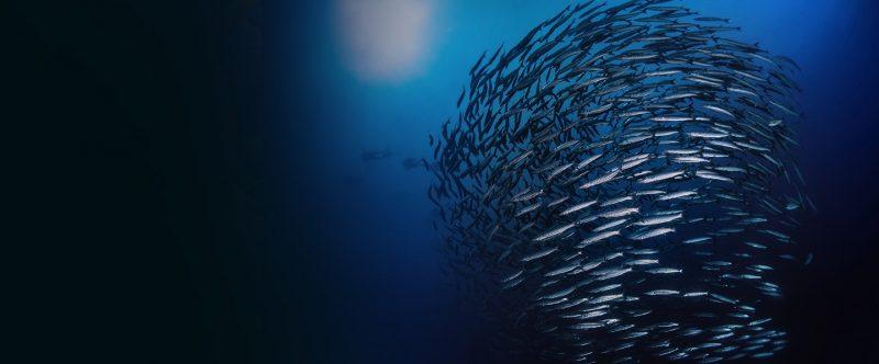 FishProduct